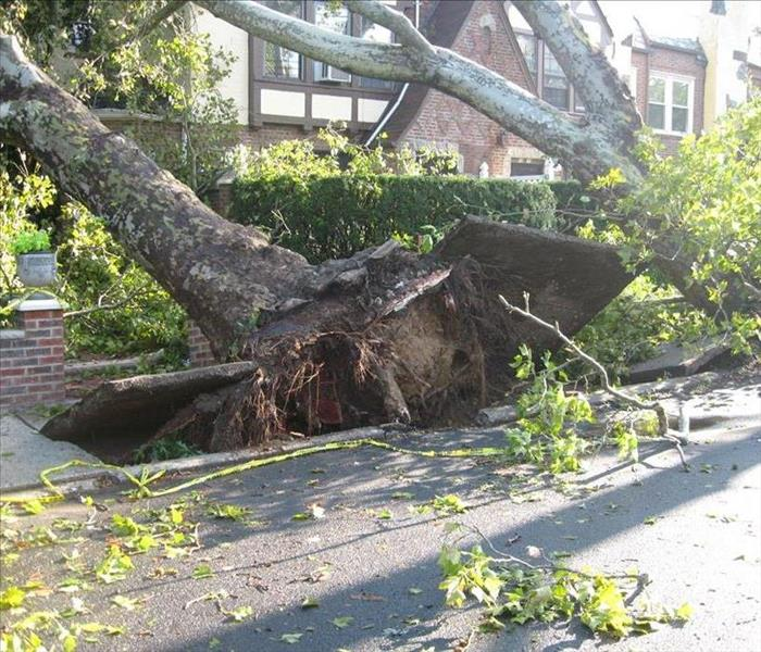 uprooted tree falling toward house